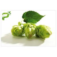 Buy cheap Flower Powdered Herbal Extracts Broad Spectrum Beer Hops Xanthohumol 98% CAS from wholesalers