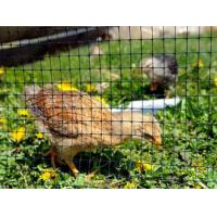 China Oriented Plastic Poultry Netting - Keep Predator Out on sale
