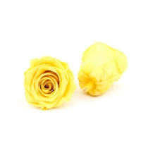 China Immortal Diameter 5-6cm Preserved Rose Flower For Mothers Day on sale