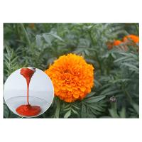 Buy cheap Eye Health Lutein Marigold Flower Extract , Tagetes Erecta Extract As Diet Supplements from wholesalers