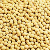China cooking soybean oil Supplier