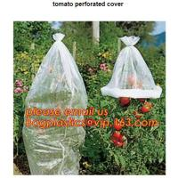 China Garden used tomato plastic film cover,high light transmittance solar control seeding nursery greenhouse covers,100% virg on sale