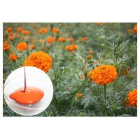 Buy cheap Food Pigment Natural Dietary Supplements Orange Red Lutein Marigold Flower Extract from wholesalers