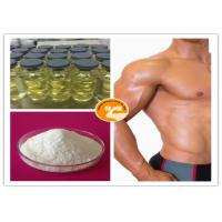 China Muscle Growth Test Sustanon 250 CAS Number 57 85 2 Testosterone - 17beta - Propionate wholesale