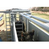 China Powder Coating Cattle Sorting Alley , Fully Caulked Cattle Tub And Alley wholesale