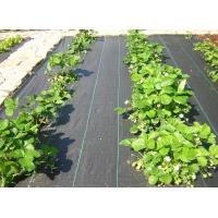 China Agricultural Black Plastic Ground Cover / pp weed mat / prevent weed cloth with different sizes on sale