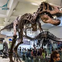 China Life Size Dinosaur Skeleton Model Replicas For Museum on sale