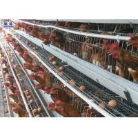 Poultry Production And Management Quality Poultry