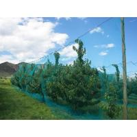 China Warp Knitted Covering Fruit Tree Insect Screen Mesh Bag Protection Netting wholesale