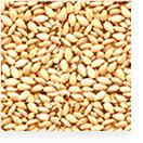 China Sesame Seeds Supplier