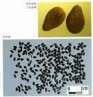 China Black Sesame Seed Color Supplier