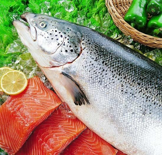 Quality FISH PRODUCTS Salmon for sale