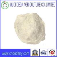 China Feed Grade Rice Protein Meal Animal Feed Supply Rice Protein Powder With Latest Price China Supplier on sale