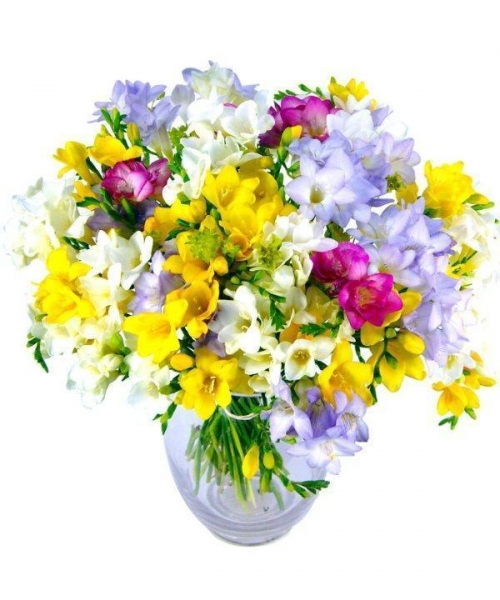 Quality Get Well Flowers Fantastic Freesias Luxury Mixed Freesias Bouquet 42.95 39.95 Fantastic Freesias for sale