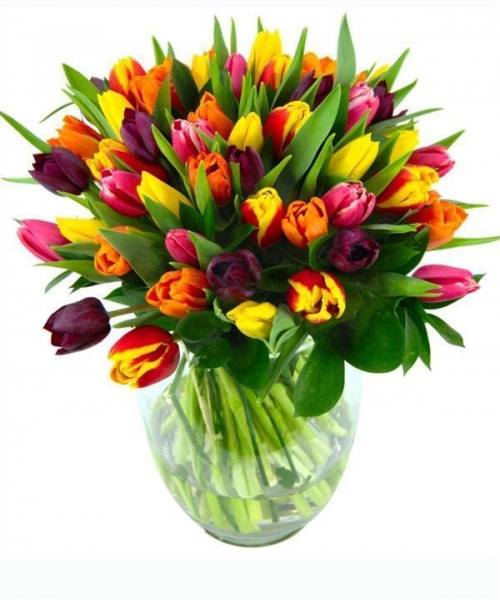 Quality Get Well Flowers Mixed Tulips Spring Tulip Flowers Bouquet 39.95 34.95 Mixed Tulips for sale