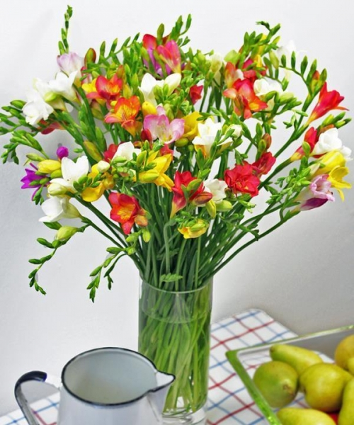 Quality Get Well Flowers Luxury Freesias Guernsey Freesias 30.00 25.00 Luxury Freesias for sale