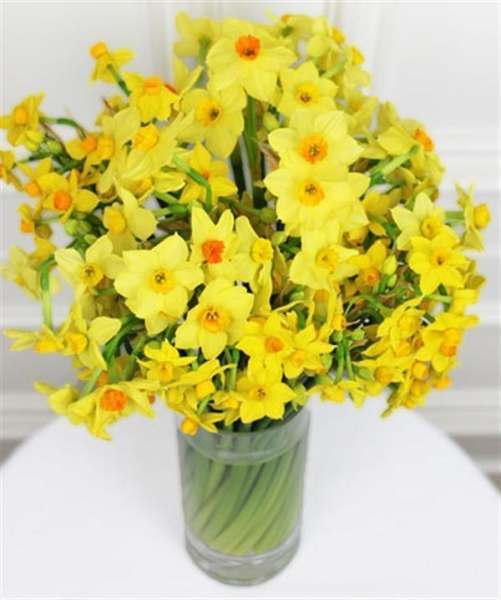 Quality Get Well Flowers 40 Scented Narcissi Flowers By Post 20.00 17.50 40 Scented Narcissi for sale
