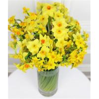 China Get Well Flowers 40 Scented Narcissi Flowers By Post 20.00 17.50 40 Scented Narcissi wholesale