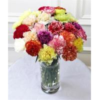 China Get Well Flowers Mixed Carnations Mixed Guernsey Carnations 25.00 20.00 Mixed Carnations wholesale