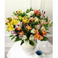 Get Well Flowers Mixed Alstroemeria Guernsey Grown Flowers 22.50 20.00 Mixed Alstroemeria