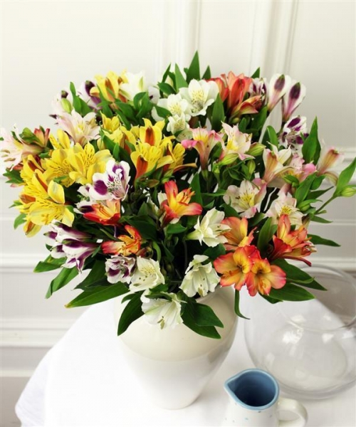 Quality Get Well Flowers Mixed Alstroemeria Guernsey Grown Flowers 22.50 20.00 Mixed Alstroemeria for sale