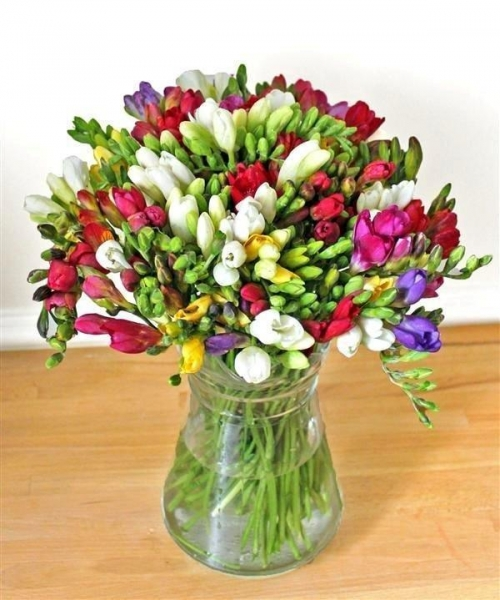 Quality Get Well Flowers Guernsey Freesias Freesias by Post 27.50 25.00 Guernsey Freesias for sale