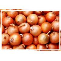 China Onion wholesale