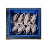 China Fresh Frozen Poultry Meat on sale