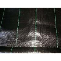 China Geosynthetic Material Black Plastic Ground Cover on sale